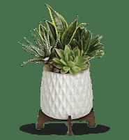 Teleflora's Modern Mood Succulent Garden