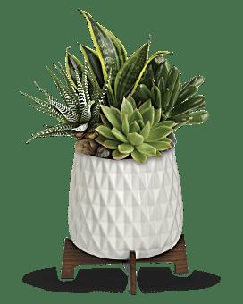 Teleflora's Modern Mood Succulent Garden Bouquet