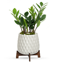 Teleflora's Luxe Leaves Plant