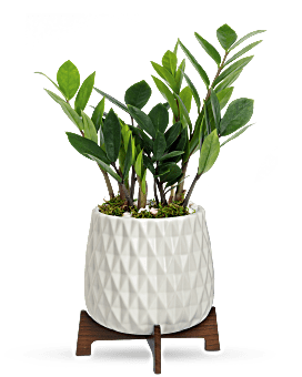 Teleflora's Luxe Leaves Plant Plant