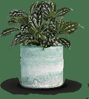 Teleflora's Seaside Mist  Plants