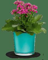 Teleflora's Shimmering Aqua Plant
