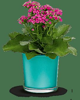 Teleflora's Shimmering Aqua Plant Plant