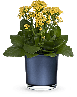 Teleflora's Golden Morning Plant  Plant