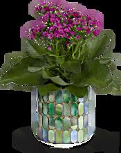 Teleflora's Memorable Mosaic  Plants