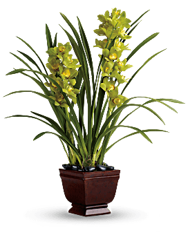 Send a Plant for Any Occasion | Teleflora