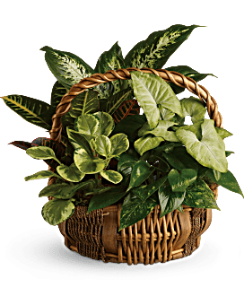 Arrangement floral Panier de jardin émeraude
