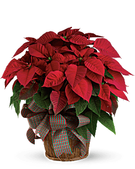 Large Red Poinsettia Bouquet