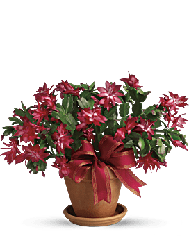 Merry Christmas Cactus Bouquet