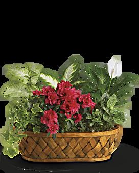 Plants Galore Plant