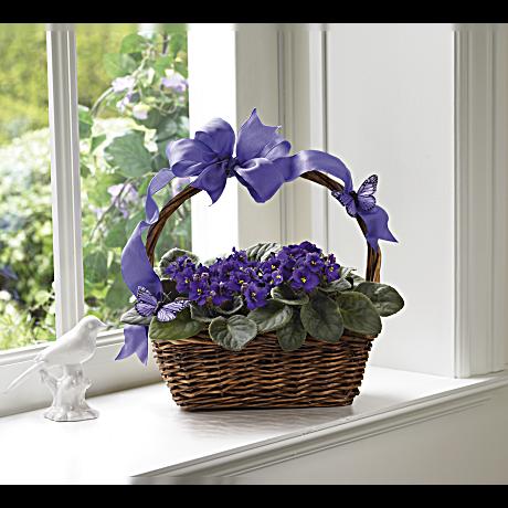 Violets And Butterflies Plant Teleflora
