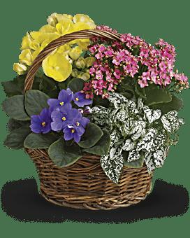 Panier de plantes mélangées Le printemps est arrivé