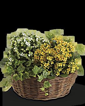 Basket of Joy Basket Arrangement