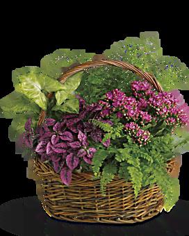 Secret Garden Basket Plant